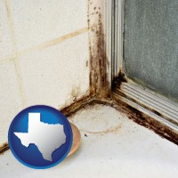 texas map icon and black mold growing in a shower stall