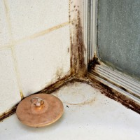 black mold growing in a shower stall