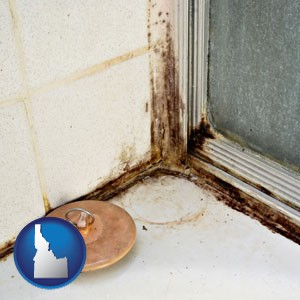 black mold growing in a shower stall - with Idaho icon