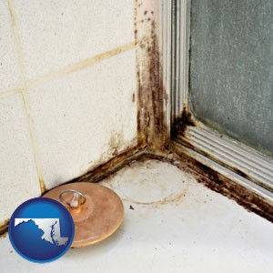 black mold growing in a shower stall - with Maryland icon